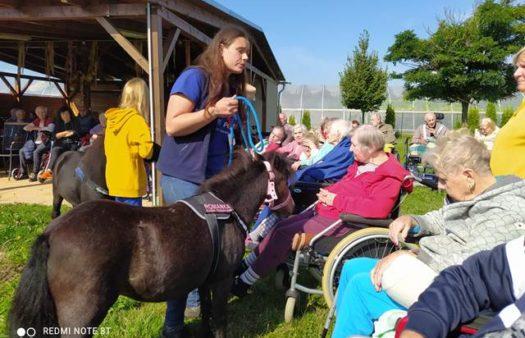 Koník Emil pomáhá v SeniorCentru v Šanově